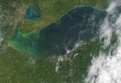 Farm runoff fuels green algae blooms in Lake Erie that are visible in satellite images. Photo: NOAA CoastWatch