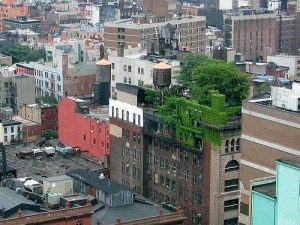 Green roofs like this one in Manhattan can capture heat-trapping carbon dioxide from the atmosphere.