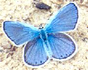 Officials from Indiana Dunes plan to study effects of climate change on the Karner Blue Butterfly.