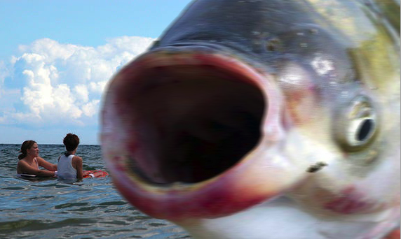 An Asian carp drops in on some Lake Michigan swimmers