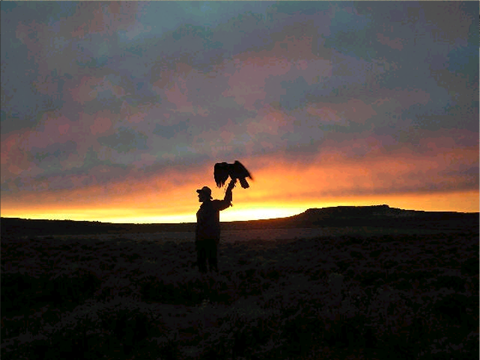 Falconry at sunset