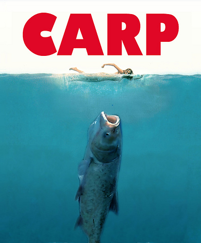Carp as Jaws