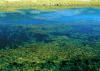 Eurasian water milfoil