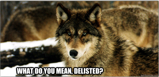angry wolf meme - photo #28