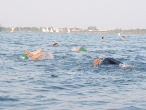 Open water swimmers training in Lake Ontario. Photo: Monado (flickr)