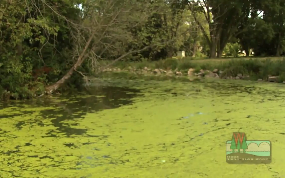 Video How To Prevent Sickness From Blue Green Algae
