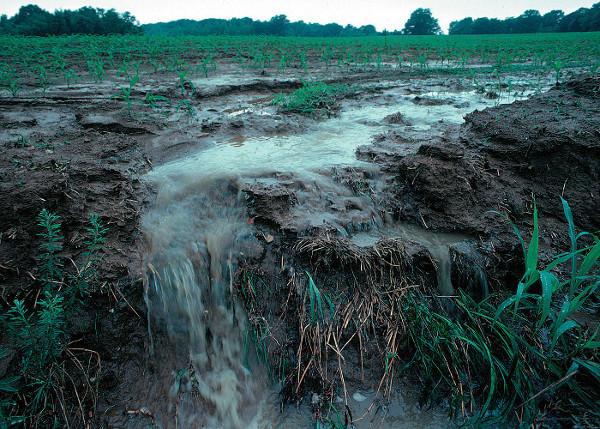 Runoff and drainage systems allow manure to flow from farms to streams. Photo: United States Department of Agriculture.