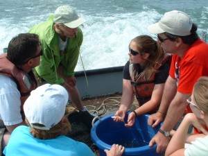 Teachers from a past session work on an aquatic food chain study. Photo: Lyndsey Manzo.