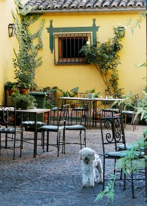 Proposal would allow restaurant to decide if it want dogs on its patio. Photo: DavidDennisPhotos (flickr)