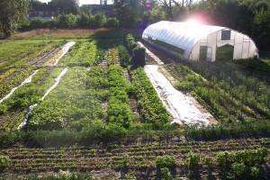 food field
