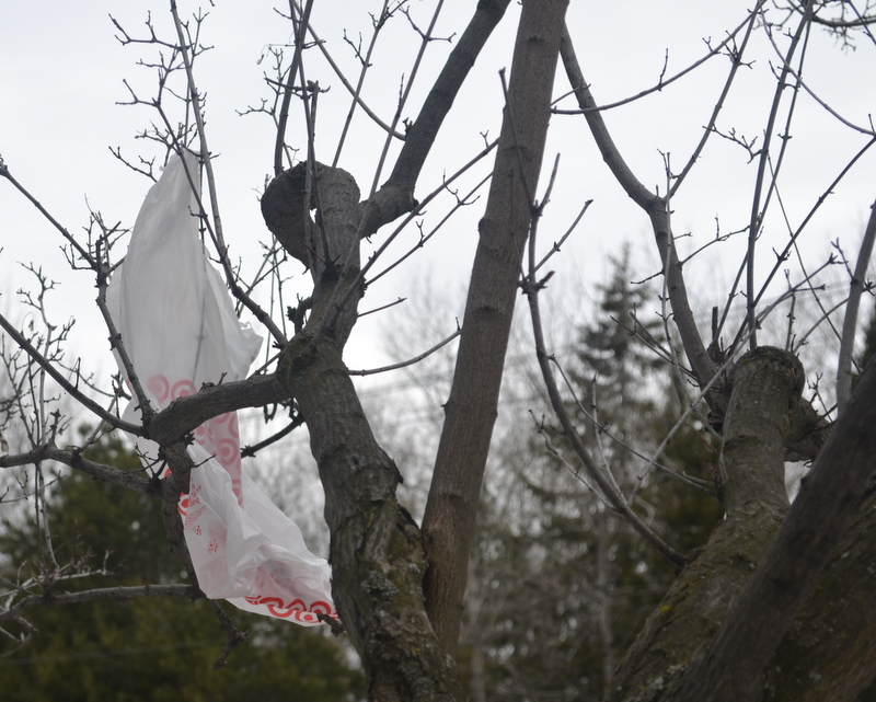 A plastic bag is caught in a tree on April 10. Shawna Mulleneardley started Bag It Duluth when finding out that plastic bags like this one never decompose, so even if it gets released from the tree, it will just find another tree, bush, waterway, or ditch to sit in. Photo: Jenae Peterson