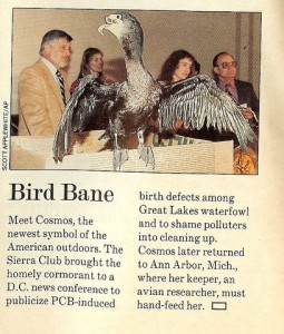 This scan of Life Magazine, May 1989, shows a news conference during Great Lakes Washington Week in 1989. Cosmo, a Great Lakes cormorant born with a twisted beak, was used by GLU officials to push for tougher pollution regulations. From left are  EPA researcher Wayland Swain and Jane Elder. Jim Ludwig, far right, was the scientist leading much of the research on birth defects, egg failures and related issues in colonial shorebirds at that time.