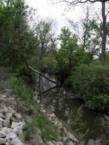 Environmental groups worry that removing too much water from small streams will kill aquatic life. Photo: Karen Schaefer