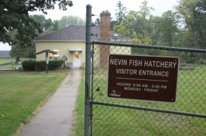 At the Nevin Hatchery in Fitchburg near Madison, thousands of trout were released into the wild before officials learned some of the fish had tested positive for cutthroat trout virus. Photo: Rory Linnane, Wisconsin Center for Investigative Journalism