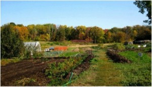 The University of Wisconsin's organic farm has been operating for more than 30 years. Photo: F.H. King at University of Wisconsin.