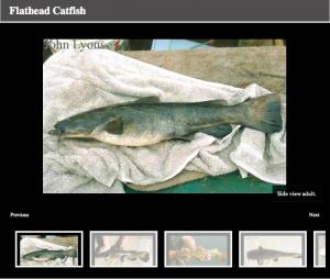 wisconsinfish