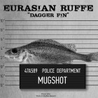 "The Eurasian Ruffe is one of the five aquatic invasive species that The Nature Conservancy has deemed the ""usual suspects"" in the Great Lakes basin. (Image: The Nature Conservancy)"