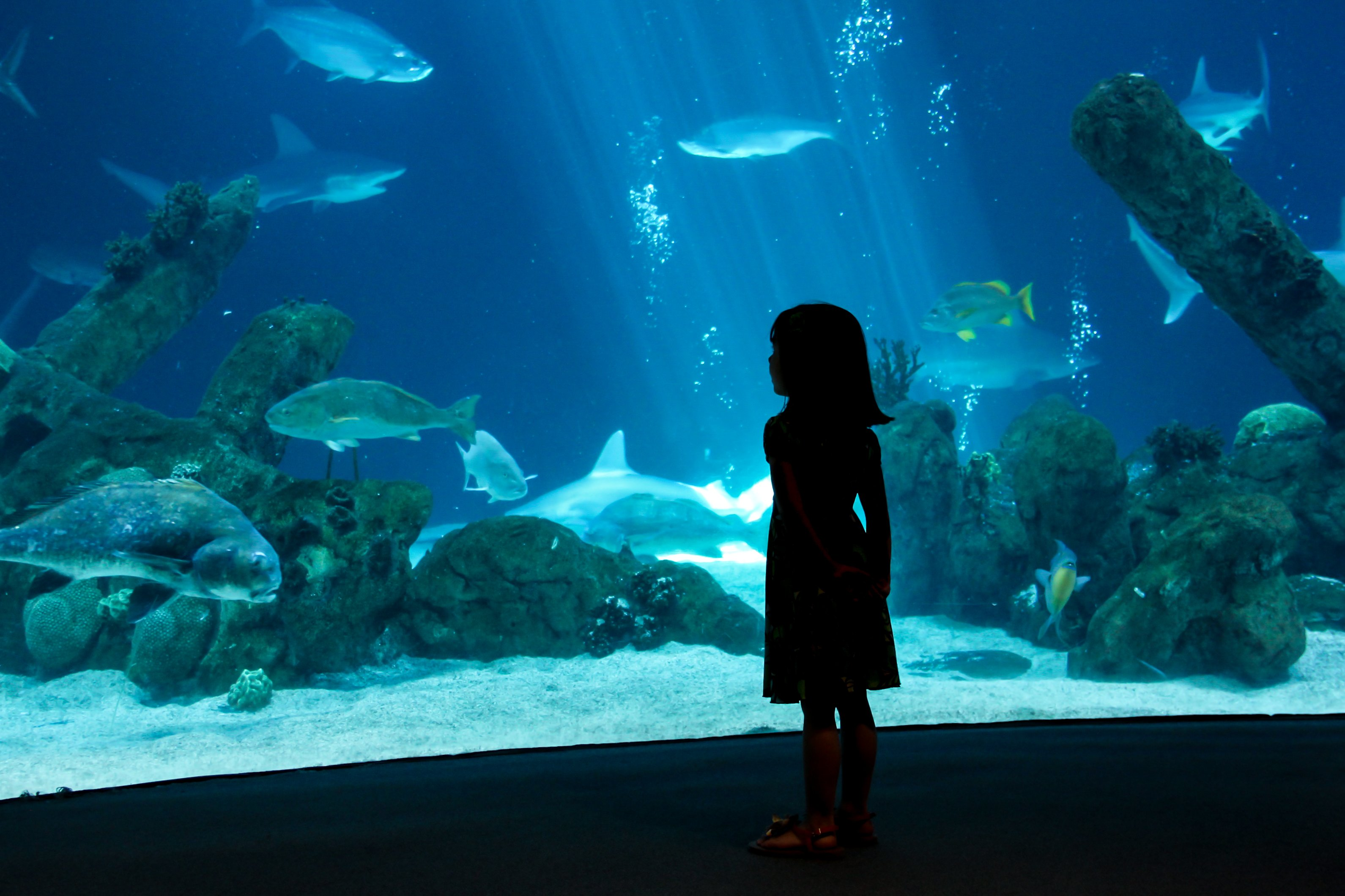 A 35,000-square-foot aquarium will be constructed inside of Great Lakes Crossing outlet mall by spring 2015. (Photo: CABQ.gov)