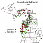 Distribution of beech scales in Michigan in 2011. Image: Michigan Department of Natural Resources
