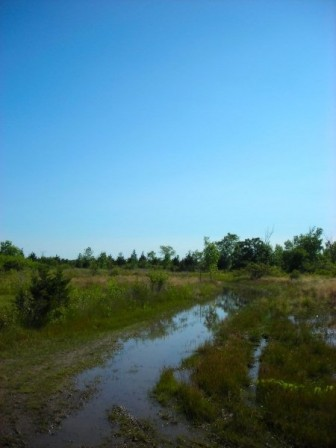 The alvar and woodlands of Ostrander Point. Photo from Prince Edward County Field Naturalists.