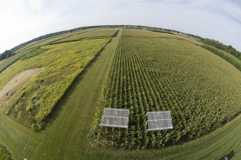 A Kellogg Biological Station test plot for testing how crops respond to reduced precipitation. Image: K.Stepnitz, Michigan State University
