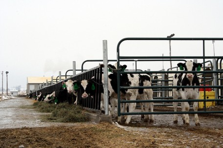 Photo: USDA.