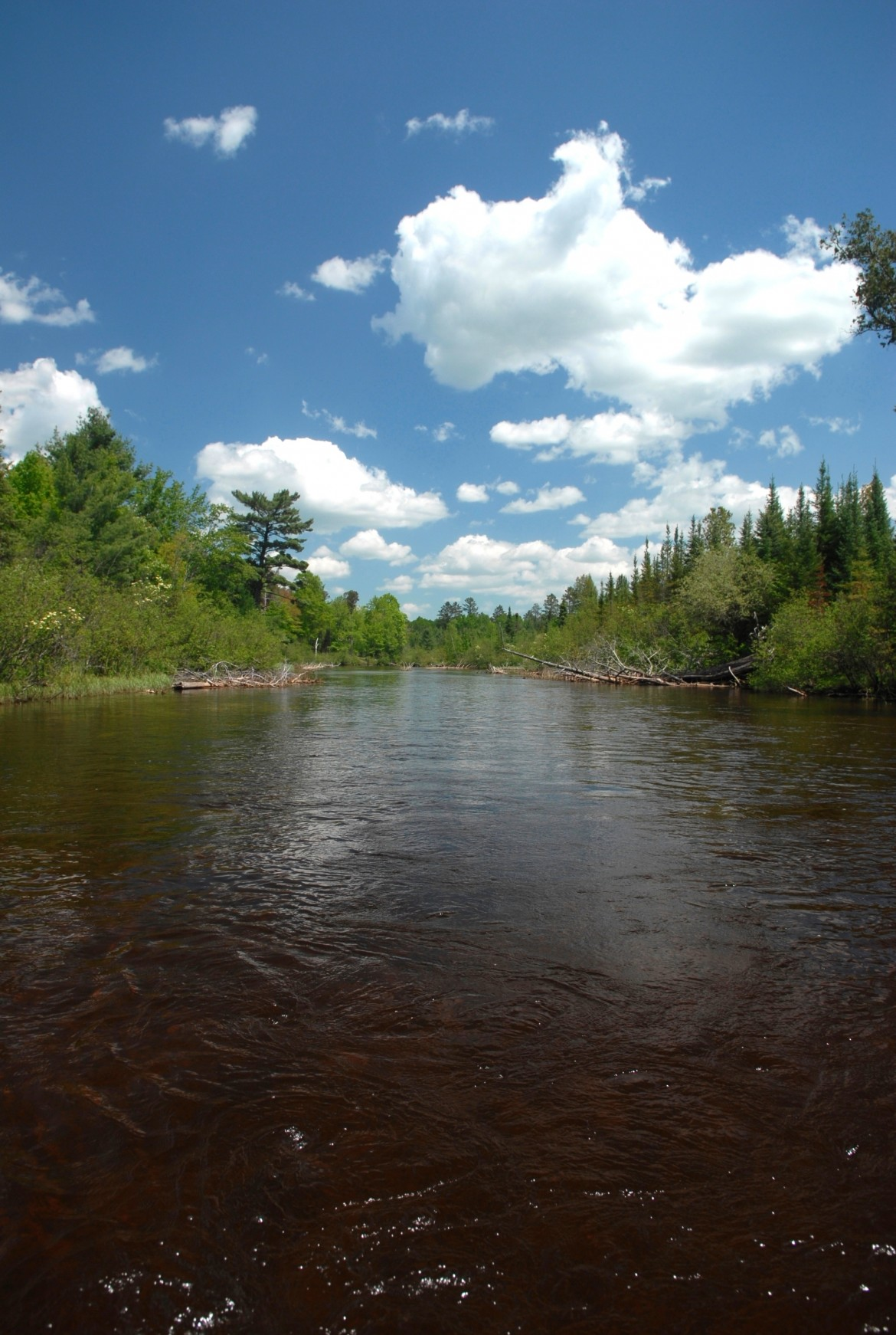 The Au Sable River in Crawford County, Mich., is in the center of a current aquaculture debate in Michigan. Image: John Russell of Great Lakes Images.