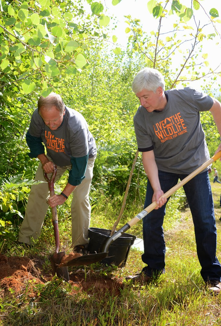 DNR Director Keith Creagh and Gov. Rick  Snyder assisted volunteers in planting more than 75 fruit-trees and shrubs to  enhance a new hunter walking trail in  southern Marquette County Aug. 13. Image: Michigan Department of Natural Resources