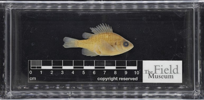 Three-dimensional digitization of fish Image: The Field Museum