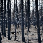 Charred forest near Lake Superior - 2