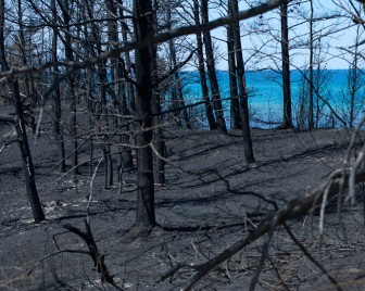 Charred forest near Lake Superior. Image: David Kenyon