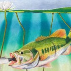 """Beneath the Surface,"" a drawing of a largemouth bass won the Best in Show award in the national competition in 2014. Jacqueline Flowers of Indiana created the piece. Image: Wildlife Forever/Jacqueline Flowers"