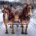 Horse drawn sleigh rides of the Black Star Farms winery. Image: Black Star Farms