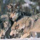 Image: National Wildlife Federation