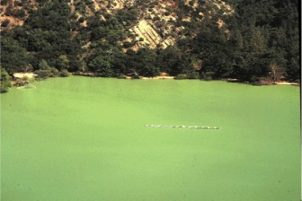 A lake with decreased Daphnia. Image: Orlando Sarnelle
