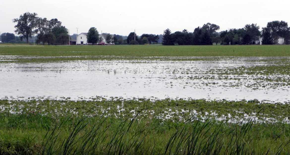 Fields have been inundated by abnormally heavy June rains. Some farmers hope to secure incentives to plant cover crops that retain nutrients. Image: Karen Schaefer