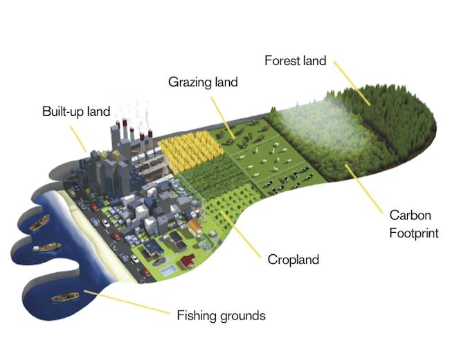 Measuring ecological wealth