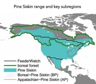 Pine siskin range
