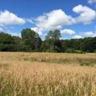Fenner Nature Center is restoring 19 acres of prairie in Lansing.  (WKAR/April Van Buren)