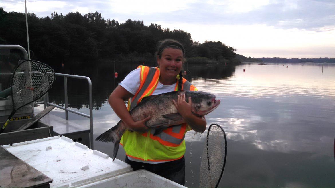 Researcher Kelsie Murchy with a bighead carp - another invasive Asian carp species. Image: Brooke Vetter