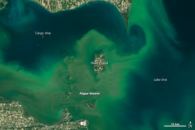 2015 Lake Erie algal bloom. The photo is competing in NASA's Tournament Earth this year.  Image: NASA