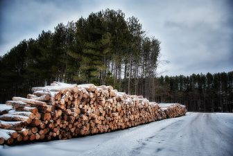 Timber from a Michigan forest. Image: Russ Allison Loar