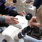 Yu Man Lee and a student use the field microscopes. Image: Marie Orttenburger.