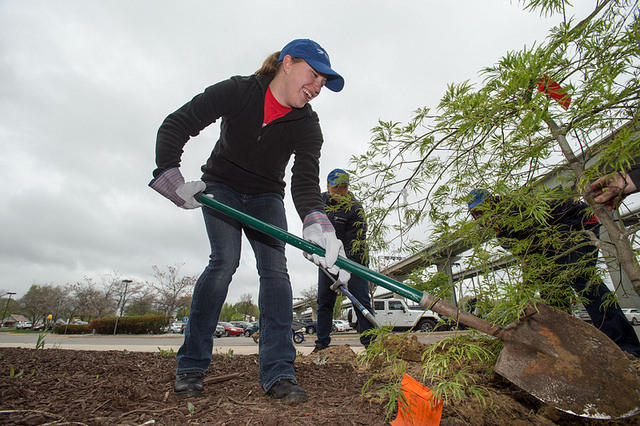 ReLeaf Michigan has planted thousands of trees around the state. Image: ReLeaf Michigan.