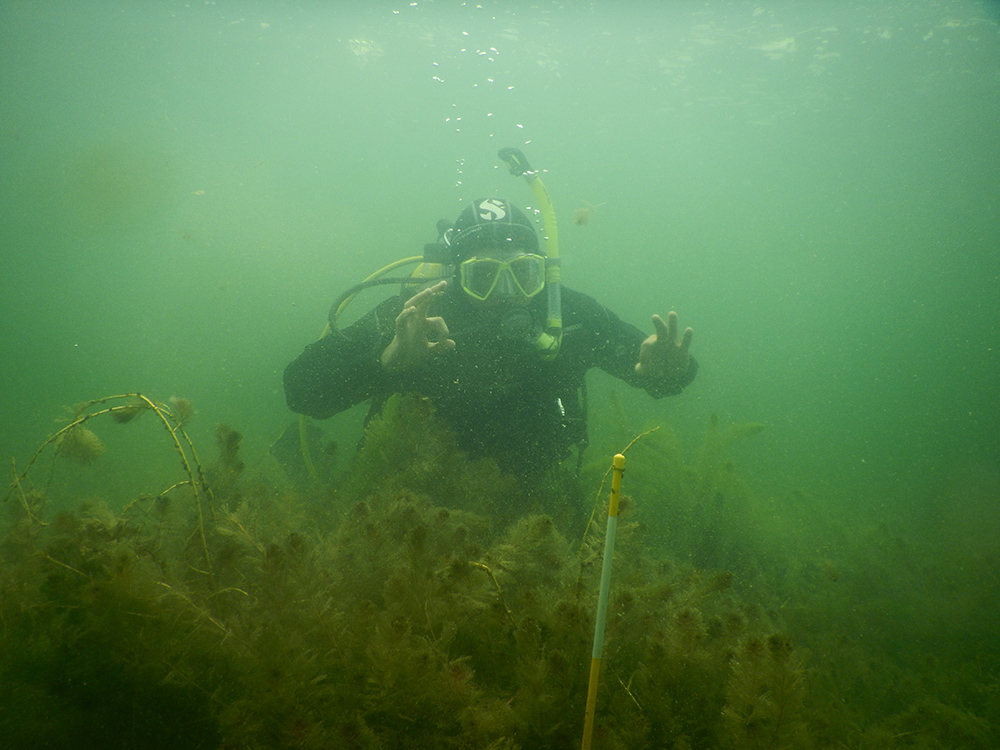 Syndell Parks diving for watermilfoil. Image: CMU.