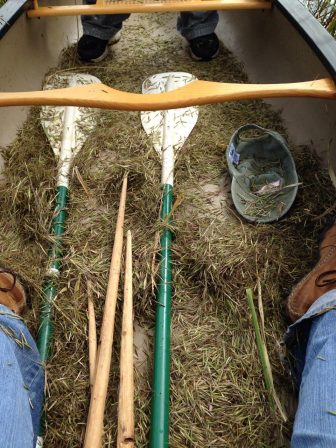 Wild rice falls into canoes and boats as part of the harvesting process. Photo: Barb Barton
