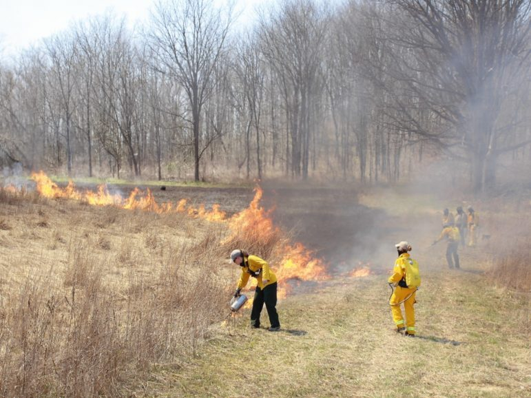 Native plants with deep roots thrive after prescribed burns every three years. Image: Jennifer Howell