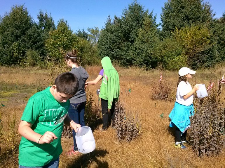 Volunteers collect native seeds that will be used to increase prairies. Image: Heidi Frei