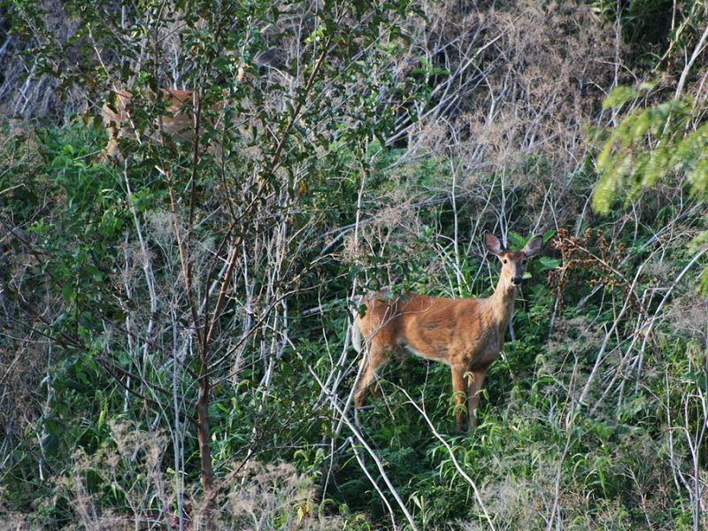 Chronic wasting disease is on the rise in the Great Lakes region. Image: USFWSmidwest, Flickr