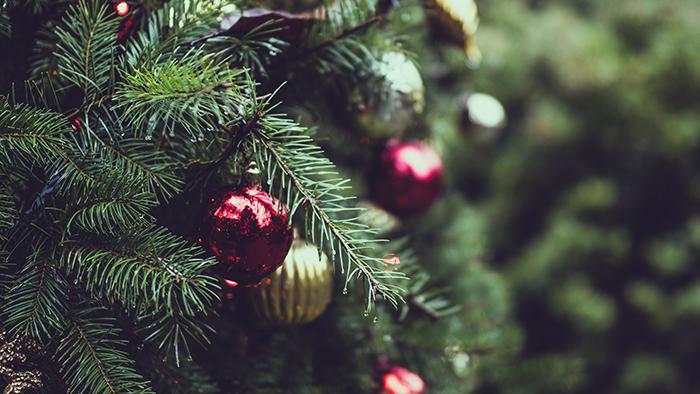 Holiday season underway for Michigan's Christmas tree growers ...